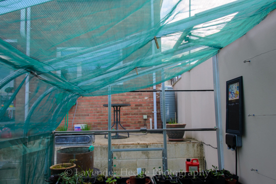 green netting shading in greenhouse