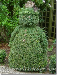 topiary man box hedge