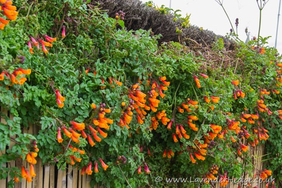 Review And Images Of Flowers Shrubs And Trees Grown In