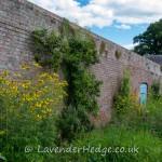 The walled garden, Croft Castle