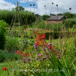 Vibrant colours in the walled garden, Croft Castle