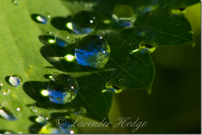 Macro of raindrops on leaf