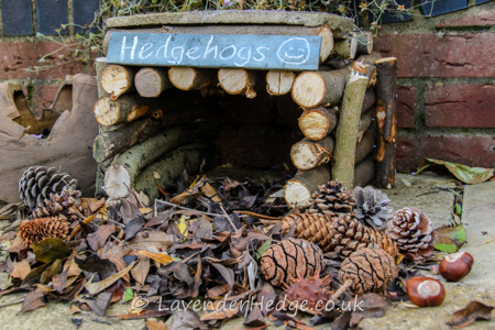 Homemade Hedgehog House