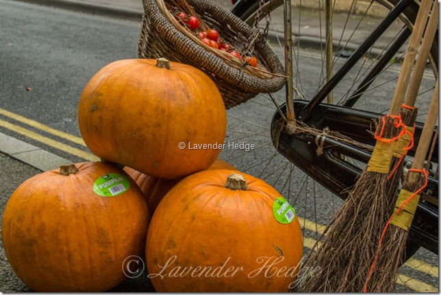 Pumpkins for sale for Halloween