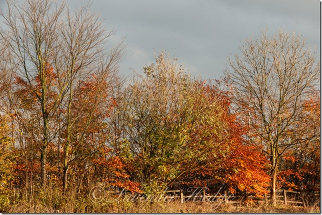 Autumn hedgerow
