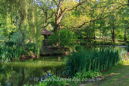 Lake under trees