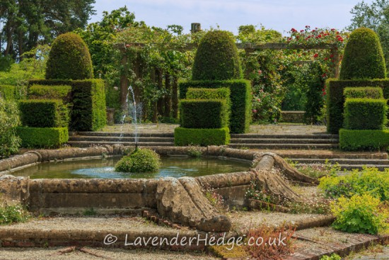 weathered fountain, topiary and self-sown planting