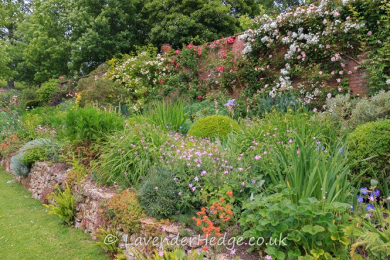 herbaceous border and walls with climbing roses