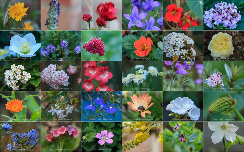montage of flowers blooming out of season