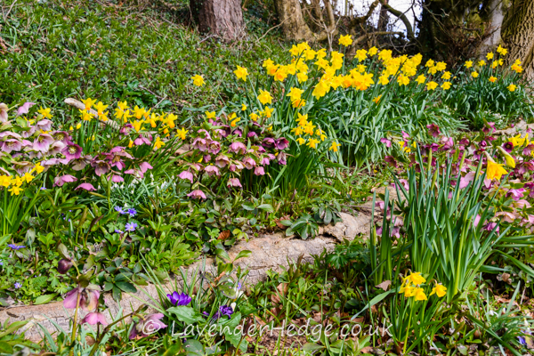 spring flowers in woodland setting