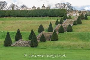 topiary lined garden stairway