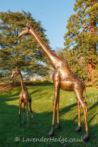 metal giraffes in garden