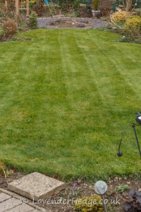lawn after cutting